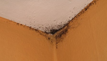 Mold in Corner of Ceiling